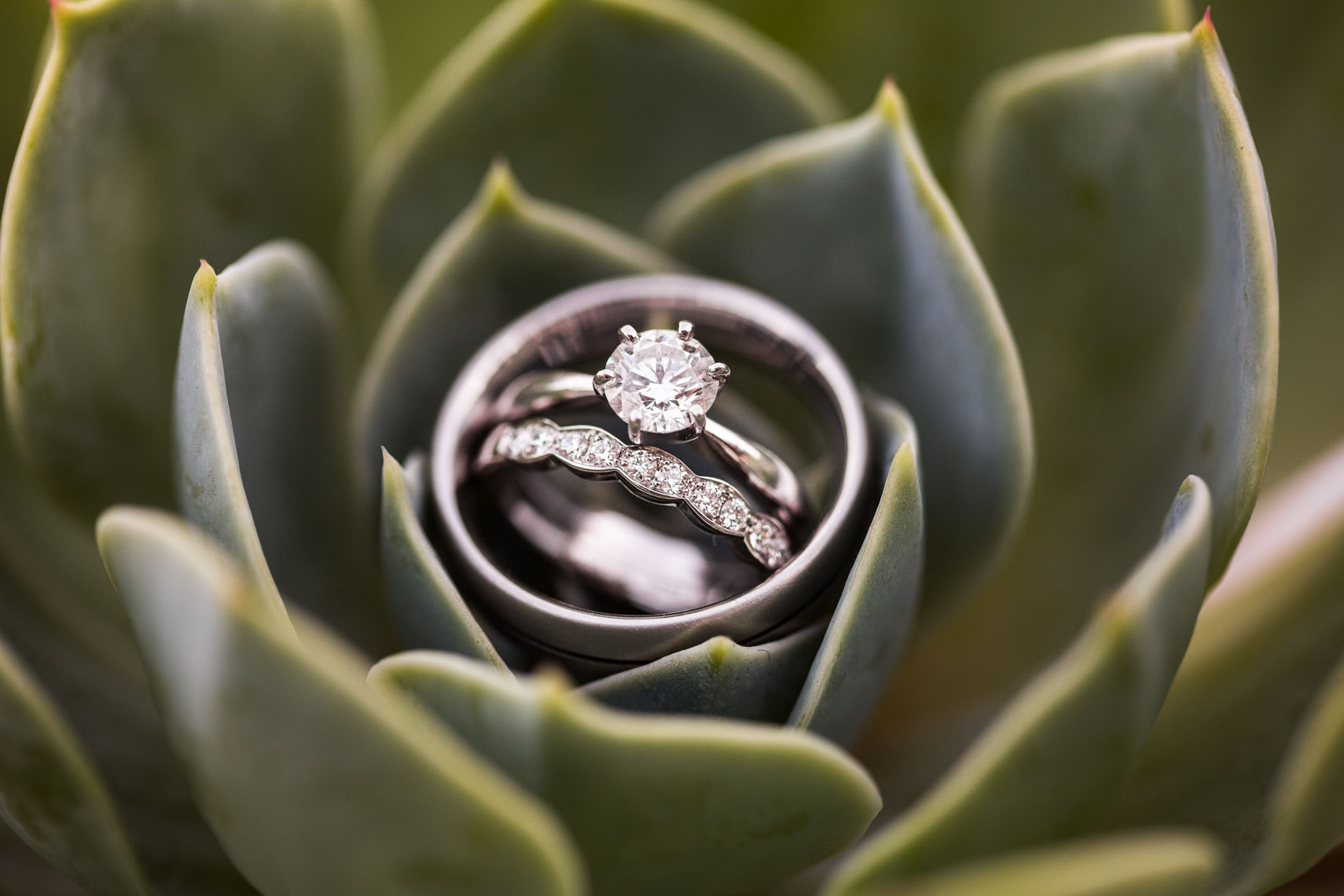 Wedding and engagement ring in a succulent plant
