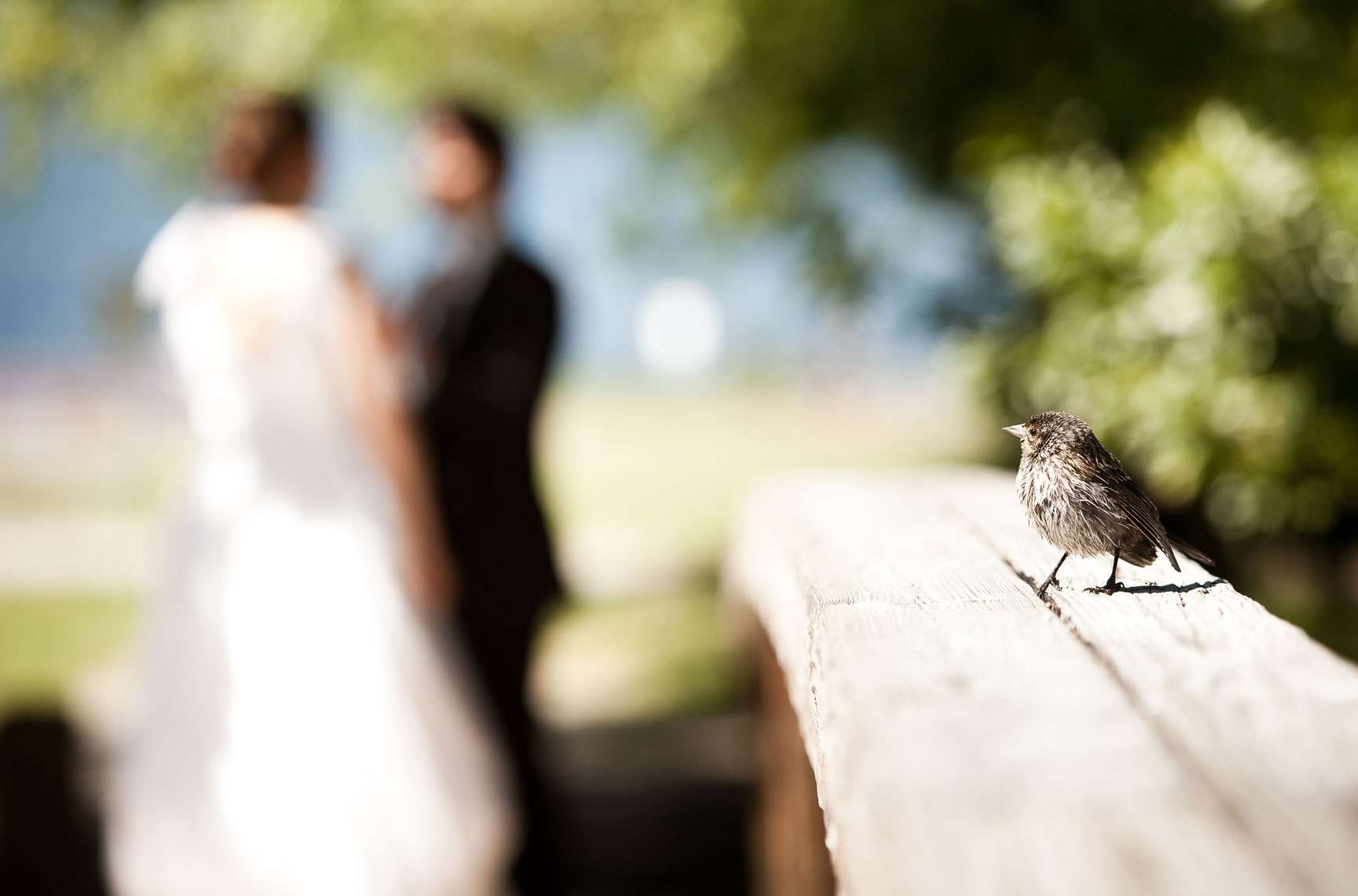 Little bird in Jericho park during Vancouver wedding