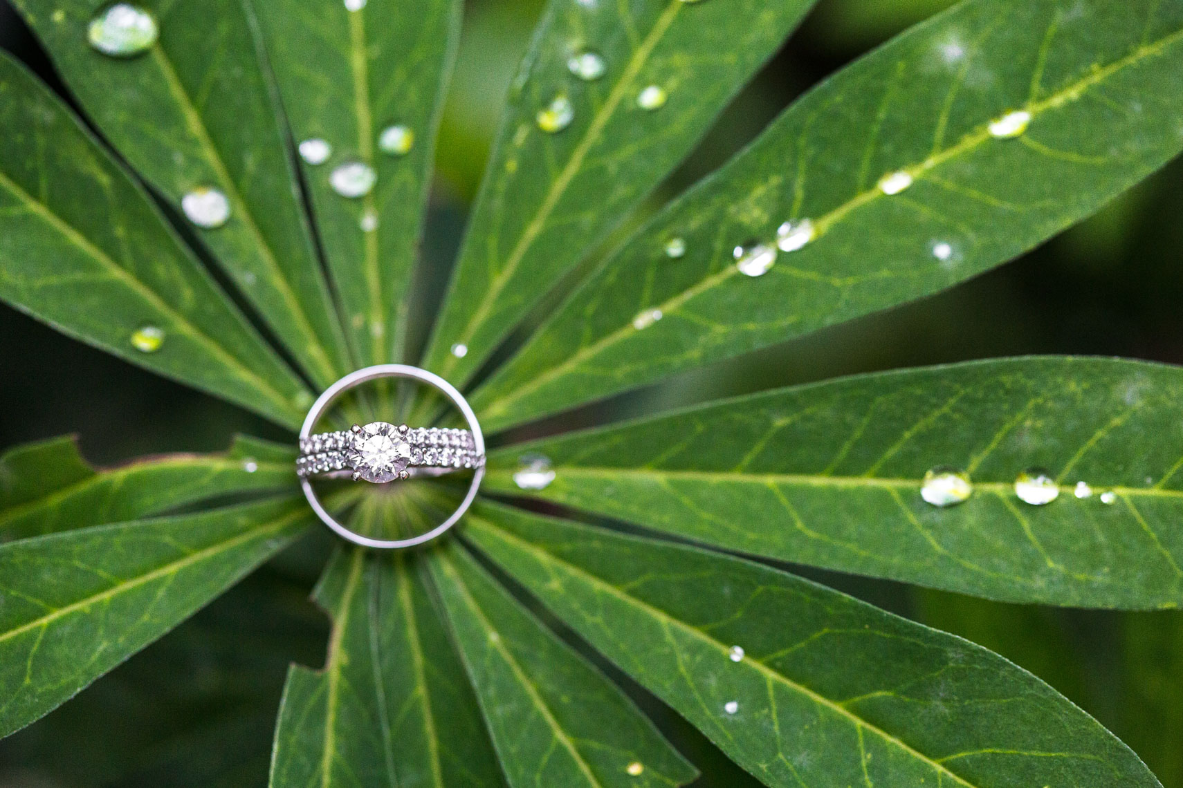 Wedding and engagement rings on plant leaves with dewdrops