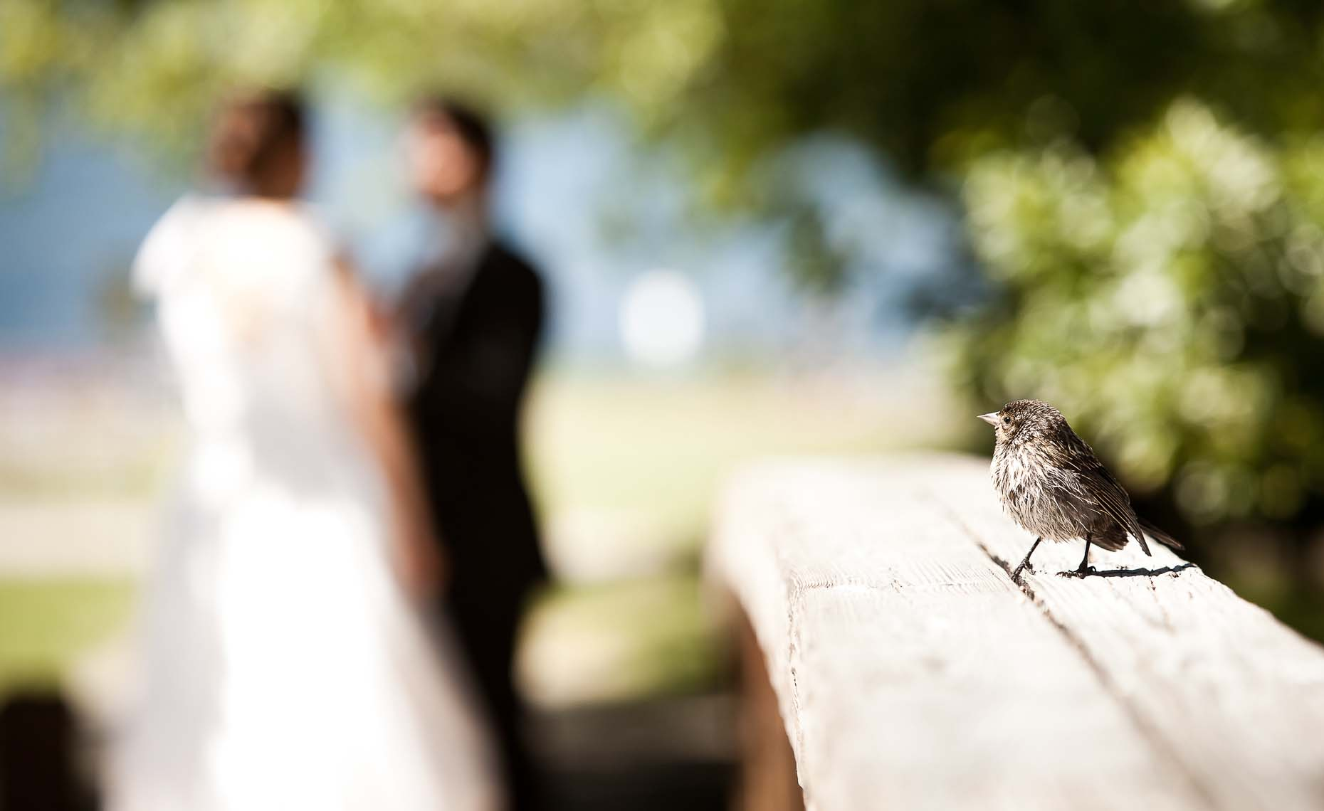 Vancouver wedding photographer captures detail of bird