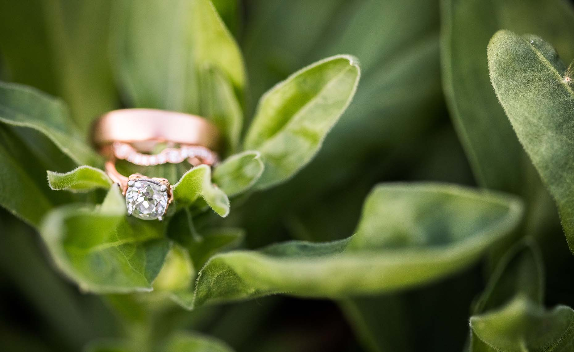 Wedding and engagement rings with organic nature.